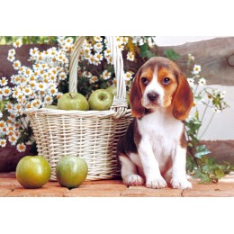 Пъзел - Puppy with Apples