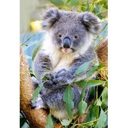 Пъзел - Koala