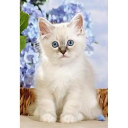 Пъзел - Birman Kitten
