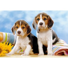 Пъзел - Beagle Puppies