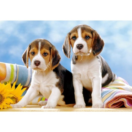 Пъзел - Beagle Puppies
