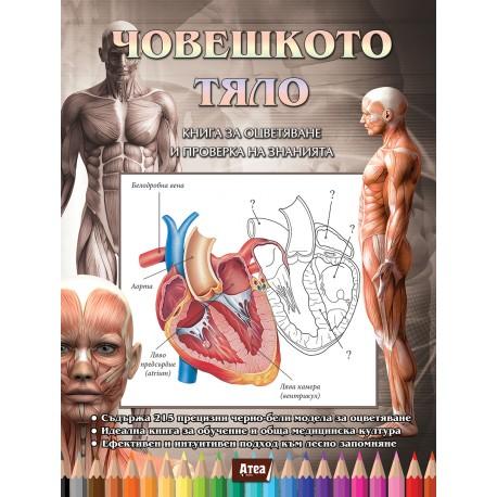 ЧОВЕШКОТО ТЯЛО. Книга за оцветяване и проверка на знанията